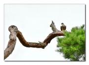 조화(새와 소나무).jpg