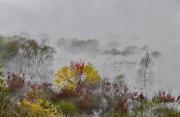 가을의 절정.jpg